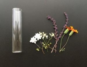 Fb_herbarium2